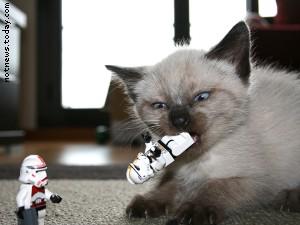 A kitten in the Clone Wars