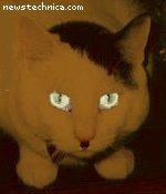 Black Not-Hitler Cat