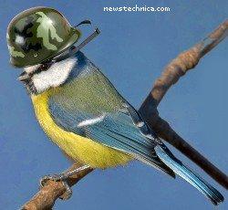 Blue Tit in helmet